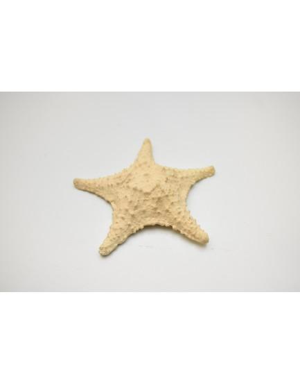 Mini estrela do mar Resina
