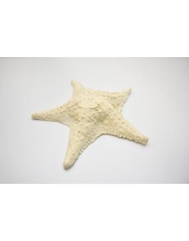 Estrela do mar em Resina
